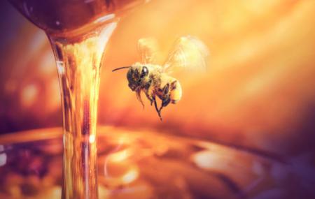 La miel de abeja se ha convertido en una medicina alternativa para pacientes con diabetes en la localidad de Nueva Rosita, comentó el Doctor Eduardo Ramírez Flores...