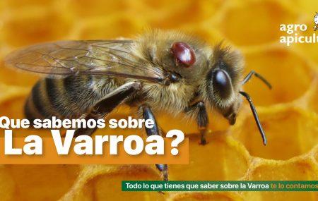 La Varroa es un ácaro que por parasitismo puede destruir tus colmenas si no intervienes eficientemente.